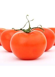 番茄50KG